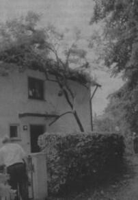 Ein umgestürzter Baum duchschlug in Leipheim das Dach eines Wohnhauses in unmittelbarer Nähe der Grund- und Hauptschule. Bild: Dieter März