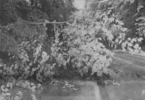 In der Reisensburger Straße in Günzburg lag nach dem heftigen Gewitter ein Baum quer auf der Fahrbahn. Bild: Dieter März