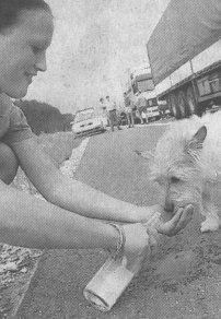 Auch für Jack-Russel-Terrier